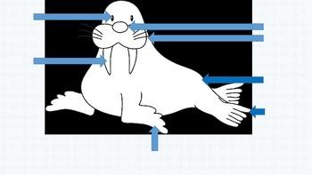 Label the Walrus ~ freebie