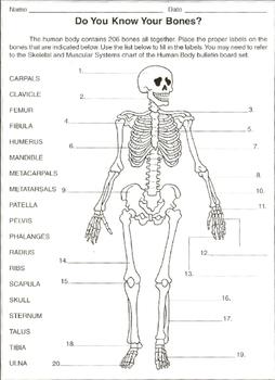 label the bones worksheet by samuel granger teachers