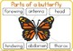Label the butterfly / parts of a butterfly worksheet