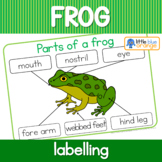 Label the frog / parts of a frog worksheet