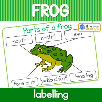 Label The Frog Parts Of A Frog Worksheet By Little Blue Orange