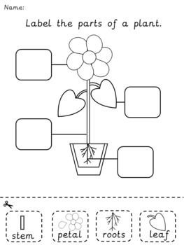 Label the parts of a plant