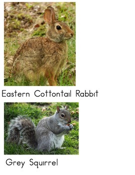Labeled Wisconsin Forest Animals PDF
