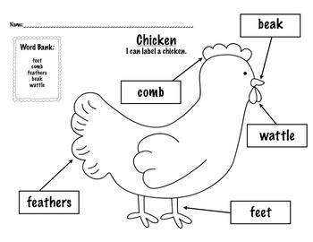 Labeling: Farm Animals