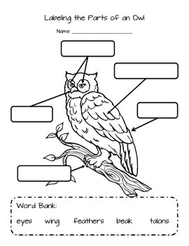 labeling parts of an owl by kinder learning garden