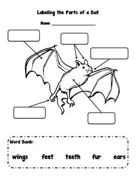 Labeling Parts of a Bat