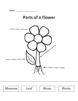 Labeling Parts of a Flower