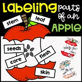 Labeling Parts of an Apple
