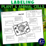 Labeling Plant and Animal Cells