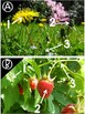 Labeling Plants