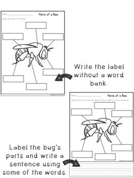 Labeling Worksheets ~ Bug Body Parts
