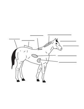 Labeling animal diagrams