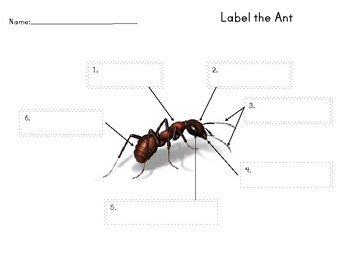 Labeling the Ant