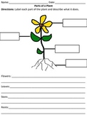 Labeling the Basic Parts of a Plant