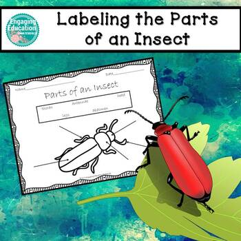Labeling the Parts of an Insect