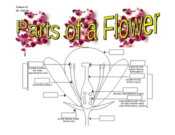 Labeling the Parts of the Flower