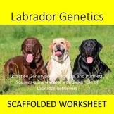 Labrador Genetics