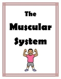MUSCULAR SYSTEM UNIT