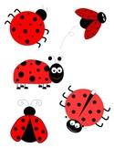Lady Bug Clipart