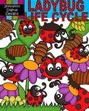 Lady Bug Life Cycle