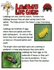 Lady Bug Life Cycle FREEBIE:  This is part of Life Cycle M