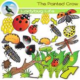 Ladybird / Ladybug Life Cycle Clip Art Set