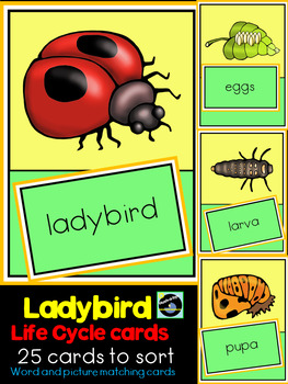 Ladybird Life Cycle Sorting Cards