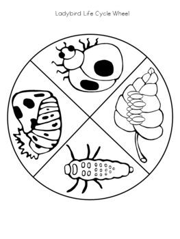 Ladybird Life Cycle Wheel