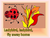 Ladybird, ladybird fly away home. Song / simple percussion