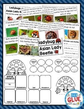 Ladybug Animal Study