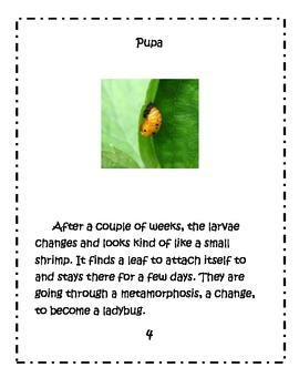Ladybug Book & Activities