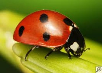 Ladybug Comprehension Activity
