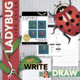 Ladybug Life Cycle Worksheet and Directed Drawing for Dist