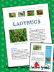 Ladybug Informational Research Paper, Newsletter, Nonfiction Text