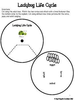 Ladybug Lapbook