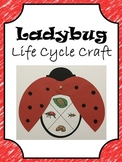 Ladybug Life Cycle Craft