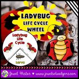 Animal Life Cycle Activities (Ladybug Life Cycle Craft)