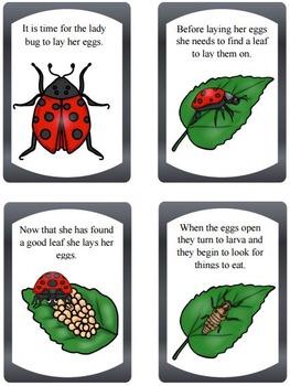 Ladybug Life Cycle Bundle