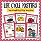 Ladybug Life Cycle Activities - Great For Centers, Seatwork, & More!