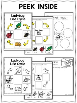 Ladybug Life Cycle Activities