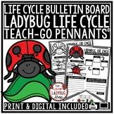Ladybug Life Cycle Activity • Teach-Go Pennants
