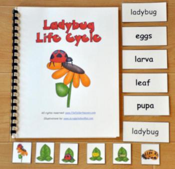 Ladybug Life Cycle Adapted Books Unit