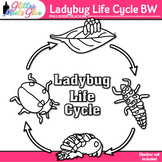 Ladybug Life Cycle Clipart: Insect and Bug Graphics B&W {Glitter Meets Glue}