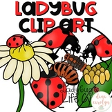 Ladybug Life Cycle Clip Art {Personal and Commercial Use}