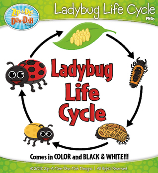 ladybug life cycle clipart zip a dee doo dah designs tpt