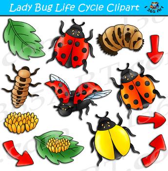 Ladybug Life Cycle Clipart