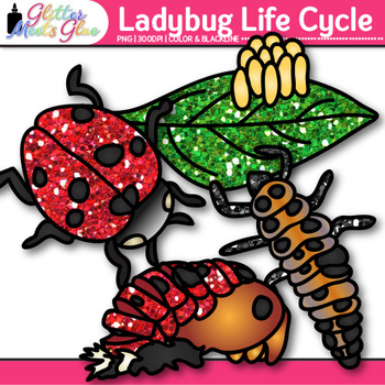 Ladybug Life Cycle Clip Art   Great for Animal Groups, Insect, & Bug Resources