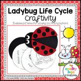 Ladybug Life Cycle Craft   Spring Activities   Bug Craft   Spring Bulletin Board