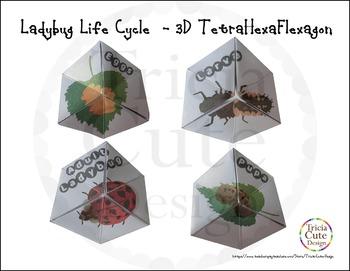 Ladybug Life Cycle Craftivity –3D TetraHexaFlexagon Kaleidocycle(Science Lesson)