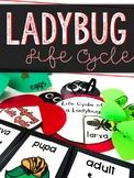 Ladybug Life Cycle Crafts